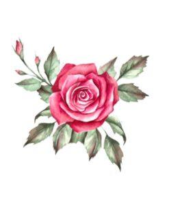 Magavad roosid